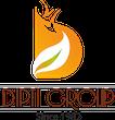 Dipti Group -